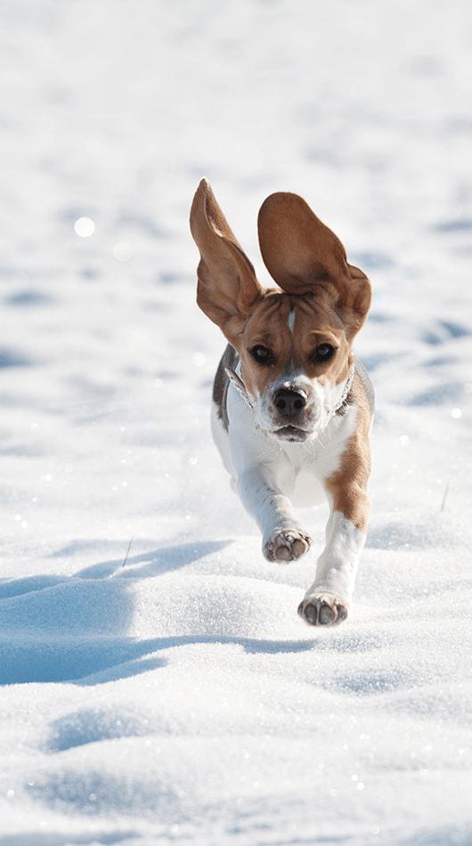 Hund rennt im Schnee